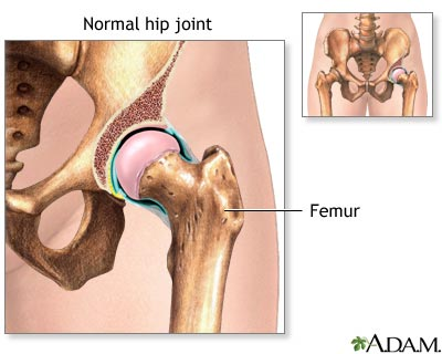 Hip Joint illustration