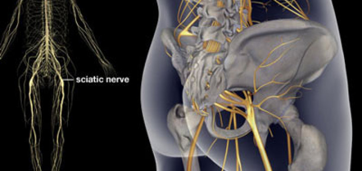 Illustration-of-the-sciatic-nerve