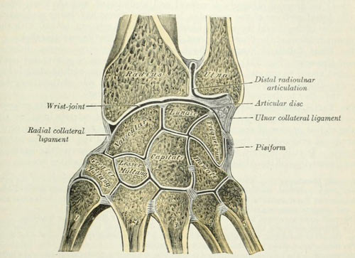 Wrist---Radiocarpal-Joint