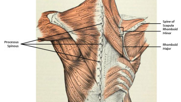 Heal Your Rhomboid Strain With 6 Simple Exercises