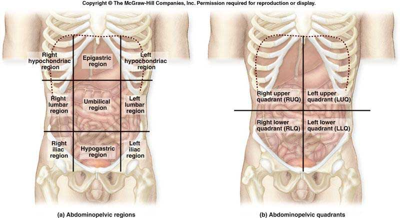 abdominal epigastric region pain after eating diagram of epigastrium