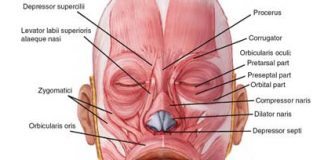 An image of face muscles that twitch