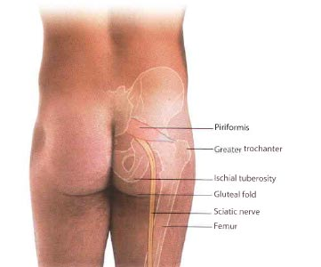 The Path Of The Sciatic Nerve